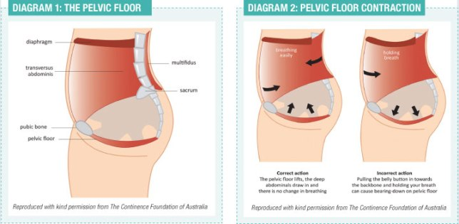 pelvic floor contractions